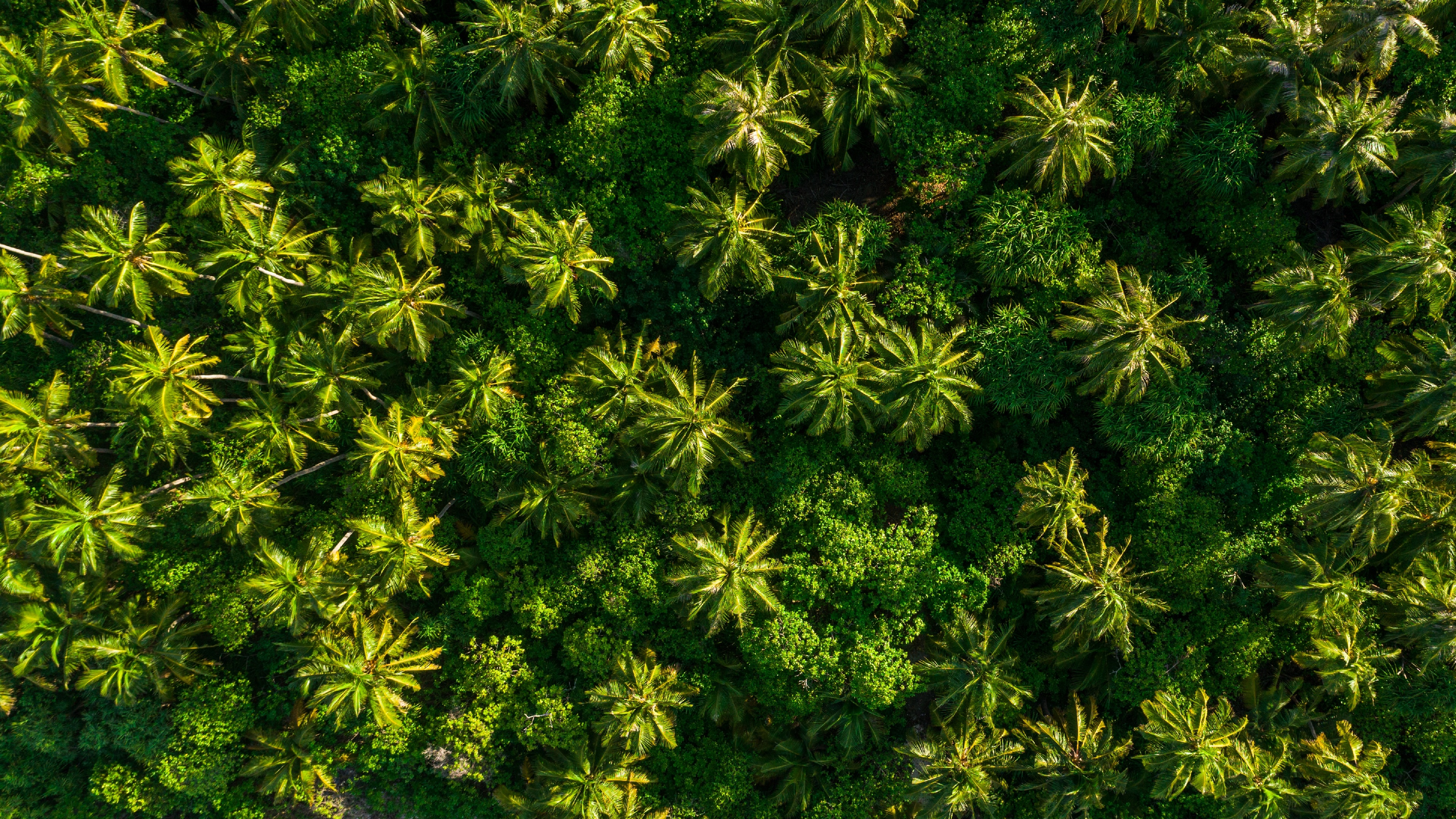 Aerial View Of Tropical Forest 4k Ultra Fondo De Pantalla Hd