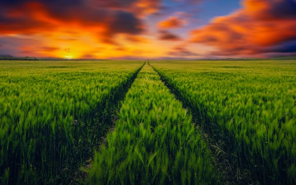 Earth Field HD Wallpaper | Background Image