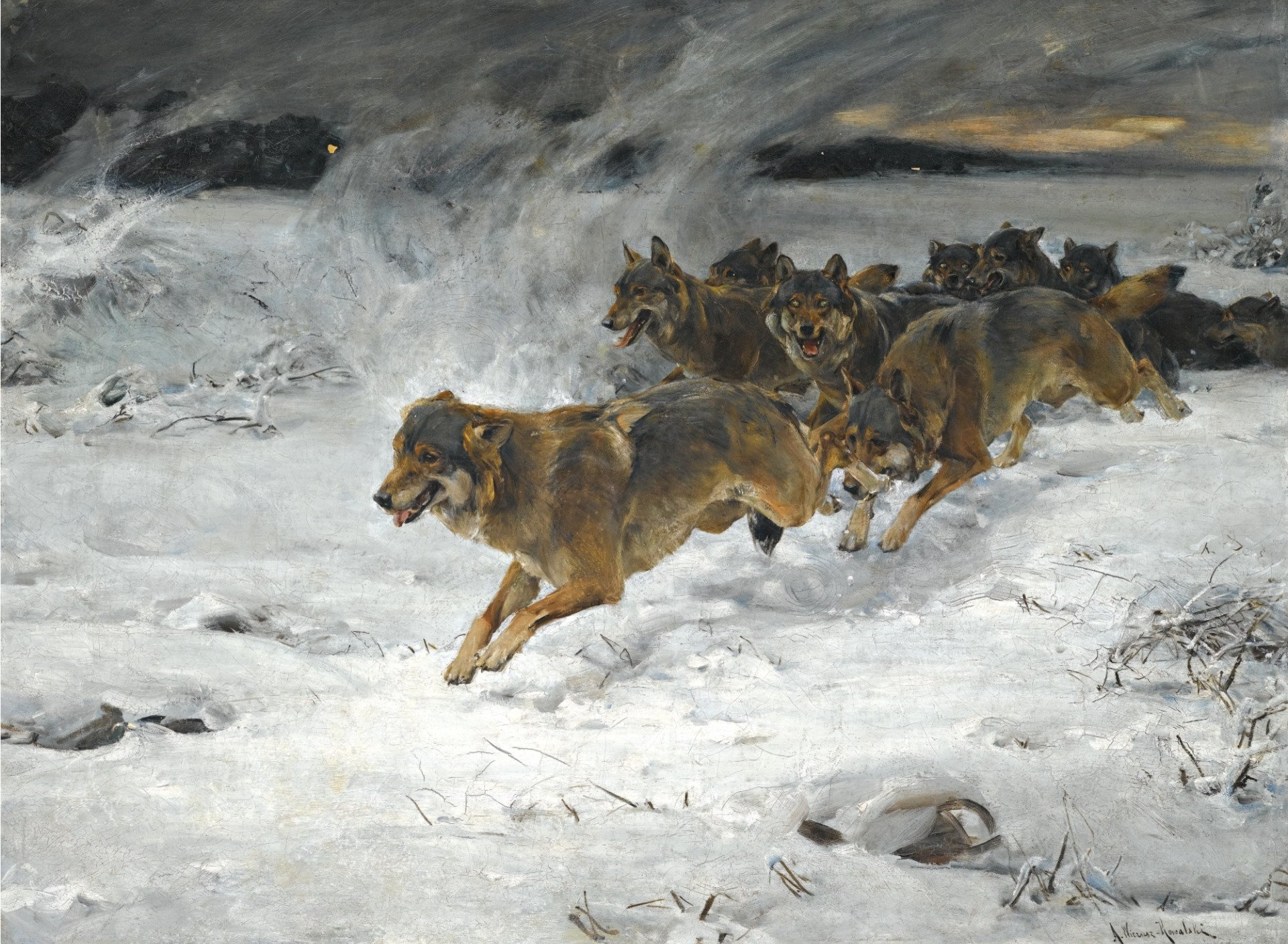 Wolf Pack Running In The Snow Hd Wallpaper Background Image 1920x1408 Id 1053137 Wallpaper Abyss