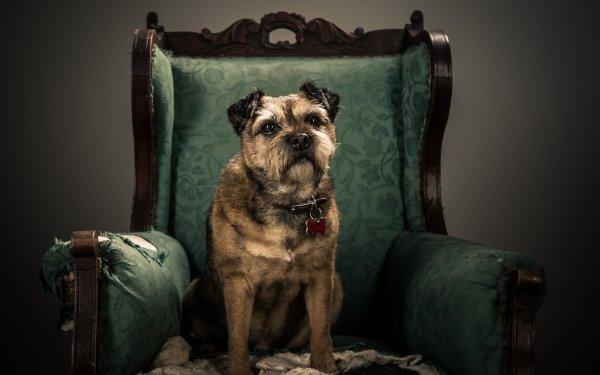 Animal Dog Dogs Pet HD Wallpaper | Background Image
