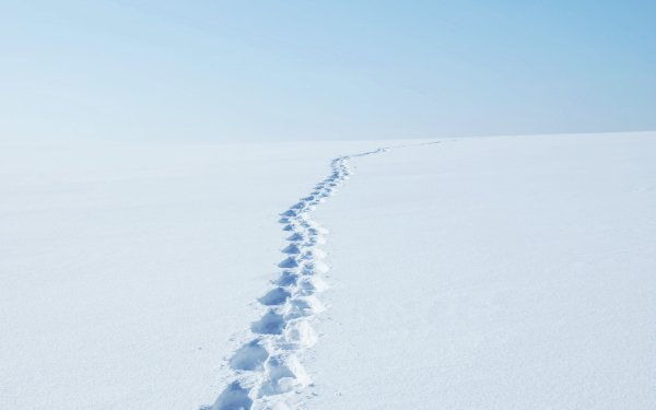 Earth Winter Snow Tracks HD Wallpaper   Background Image
