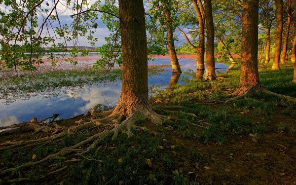 Earth Tree Root Roots Tree Lake HD Wallpaper | Background Image