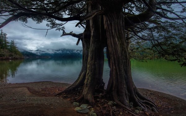Earth Tree Trees Roots Trunk Pond HD Wallpaper | Background Image