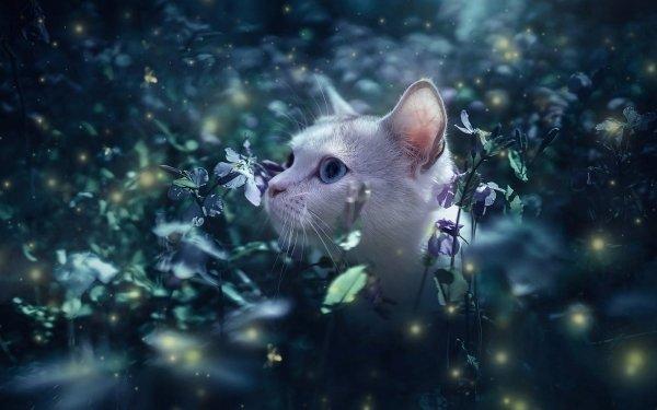 Animal Cat Cats Pet Flower HD Wallpaper | Background Image