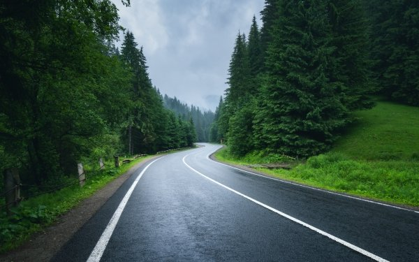 Man Made Road Forest HD Wallpaper | Background Image