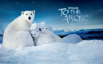 Movie - To The Arctic Wallpapers and Backgrounds ID : 284459