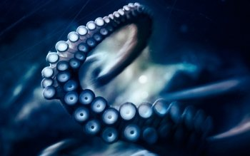 Animal - Octopus Wallpapers and Backgrounds ID : 287095