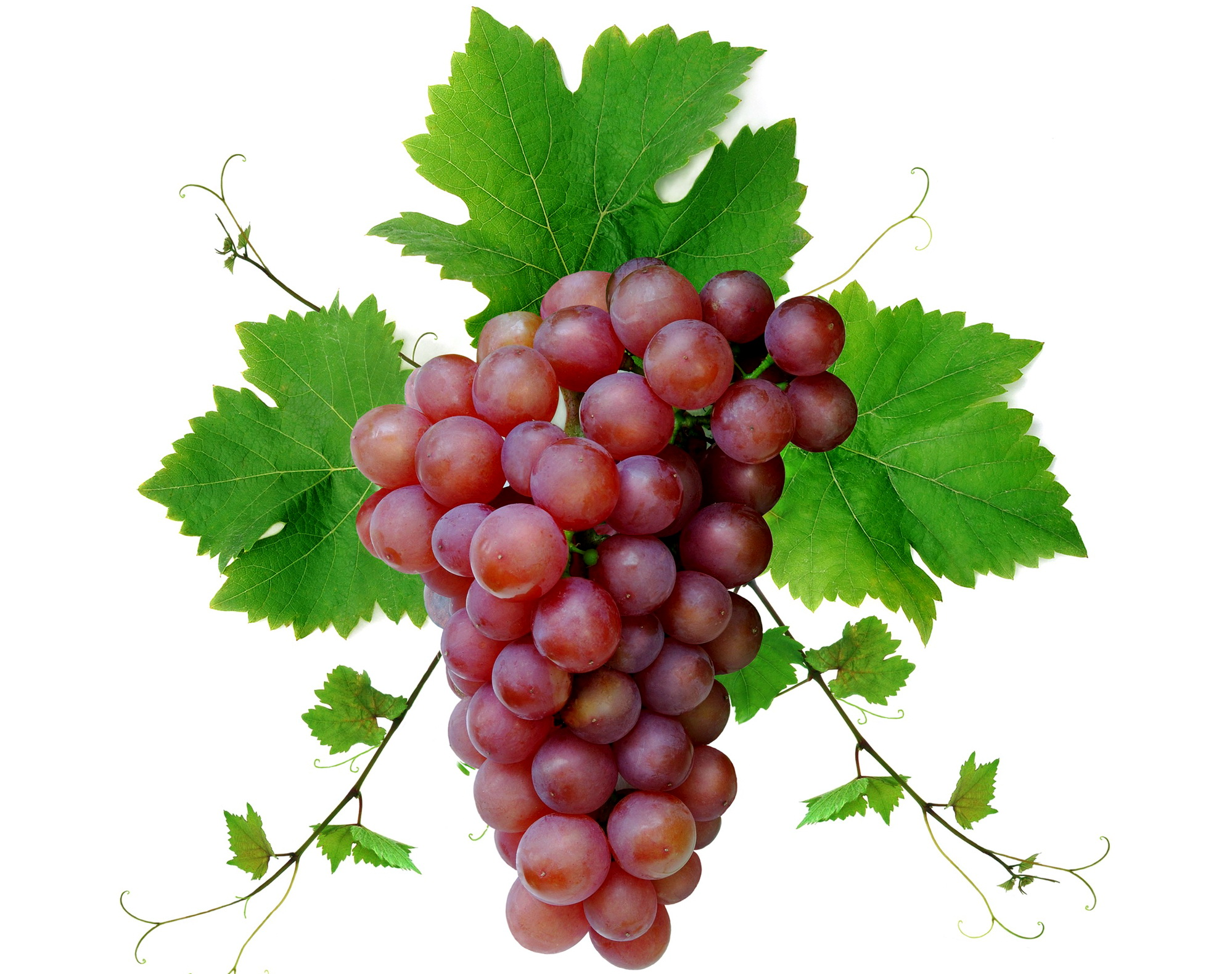 Grapes Full HD Wallpaper and Background Image | 1998x1580
