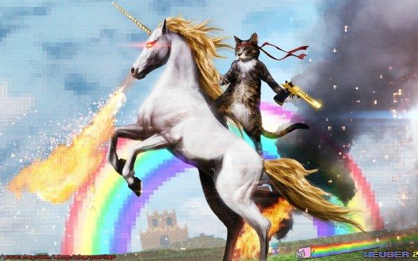 Humor Internet HD Wallpaper | Background Image