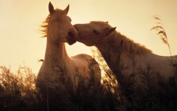 Animal - Horse Wallpapers and Backgrounds ID : 296257