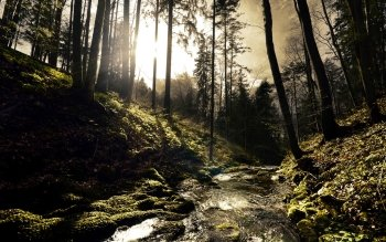 Earth - Forest Wallpapers and Backgrounds ID : 355181