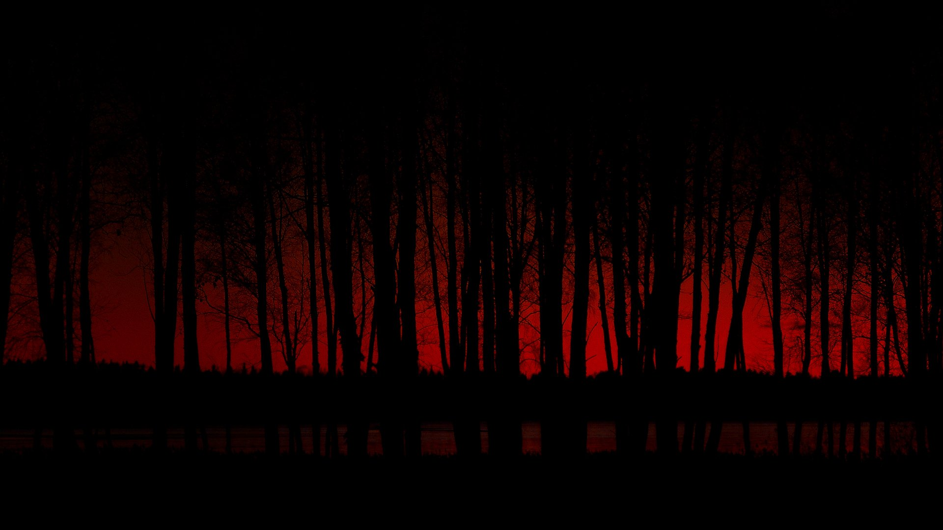 Dark - Forest  Wallpaper