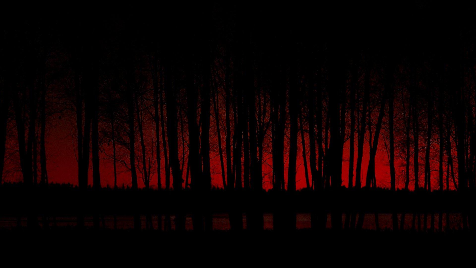 Dark - Forest  Wallpaper