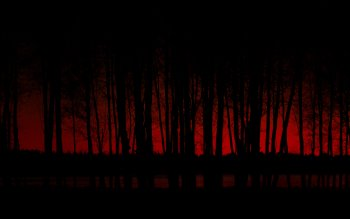 Dark - Forest Wallpapers and Backgrounds ID : 357515