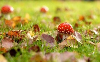 Earth - Mushroom Wallpapers and Backgrounds ID : 358159