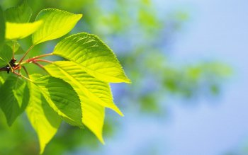 Earth - Leaf Wallpapers and Backgrounds ID : 359333