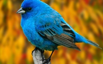 Animal - Bird Wallpapers and Backgrounds ID : 359737