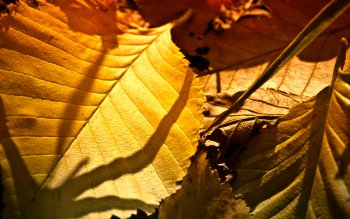 Earth - Leaf Wallpapers and Backgrounds ID : 360367