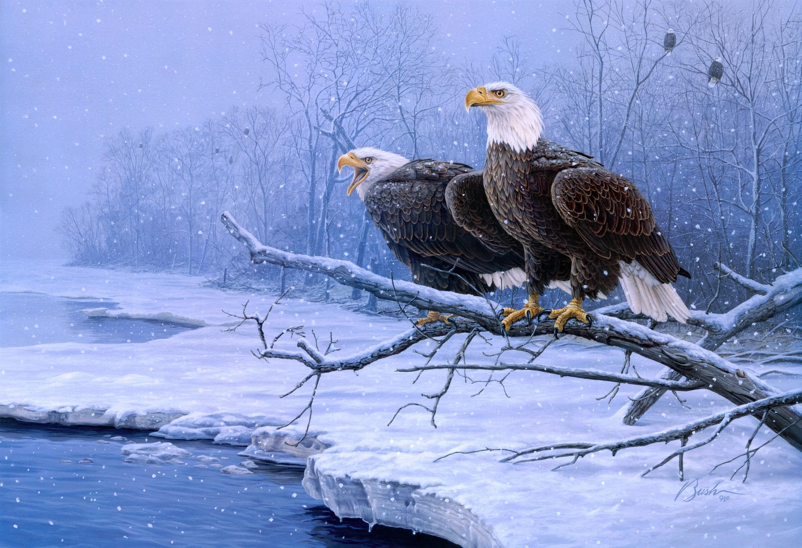 related bald eagle background - photo #1