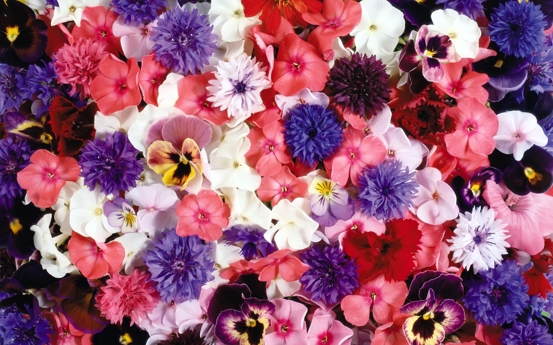 Flores Horizontales Dibujos Animados Patrón De Fondo: Flower Full HD Wallpaper And Background