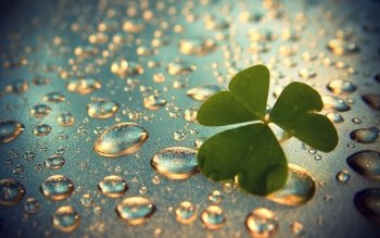 Tierra - Clover Wallpapers and Backgrounds ID : 366942