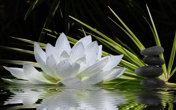 Religious Zen Flower Lotus White Flower Rock Plant HD Wallpaper | Background Image