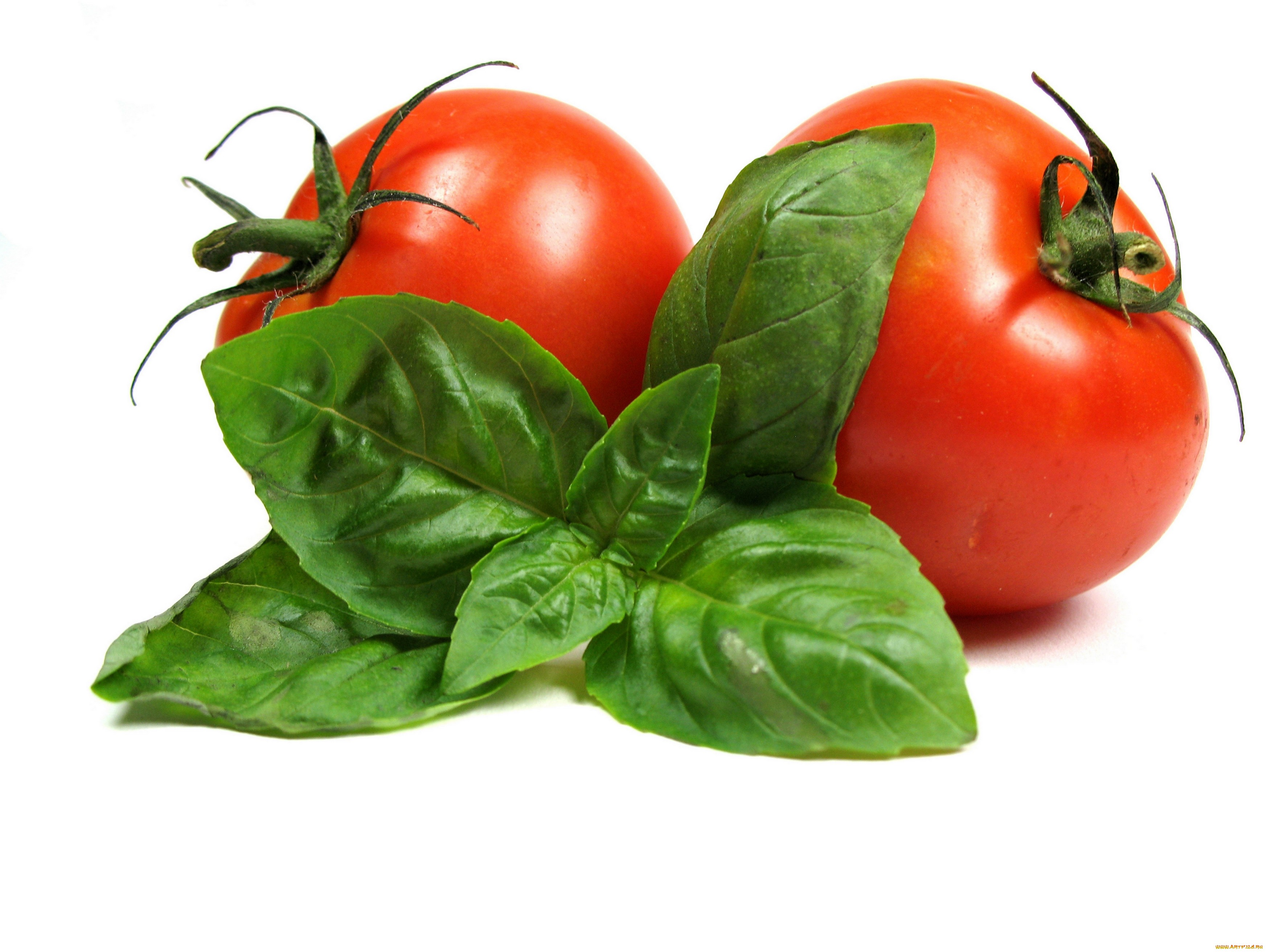 Tomato Full Hd Wallpaper And Background Image 3500x2625