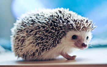 Tier - Igel Wallpapers and Backgrounds ID : 370072