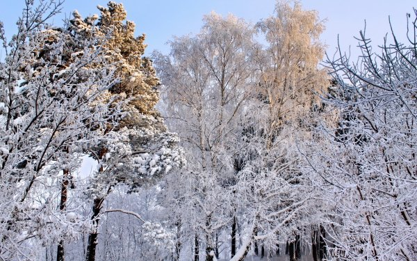 Earth Winter HD Wallpaper   Background Image
