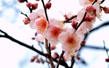 Earth - Blossom Wallpapers and Backgrounds ID : 375863