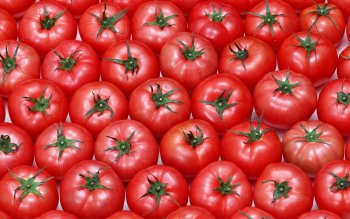 Food - Tomato Wallpapers and Backgrounds ID : 376703