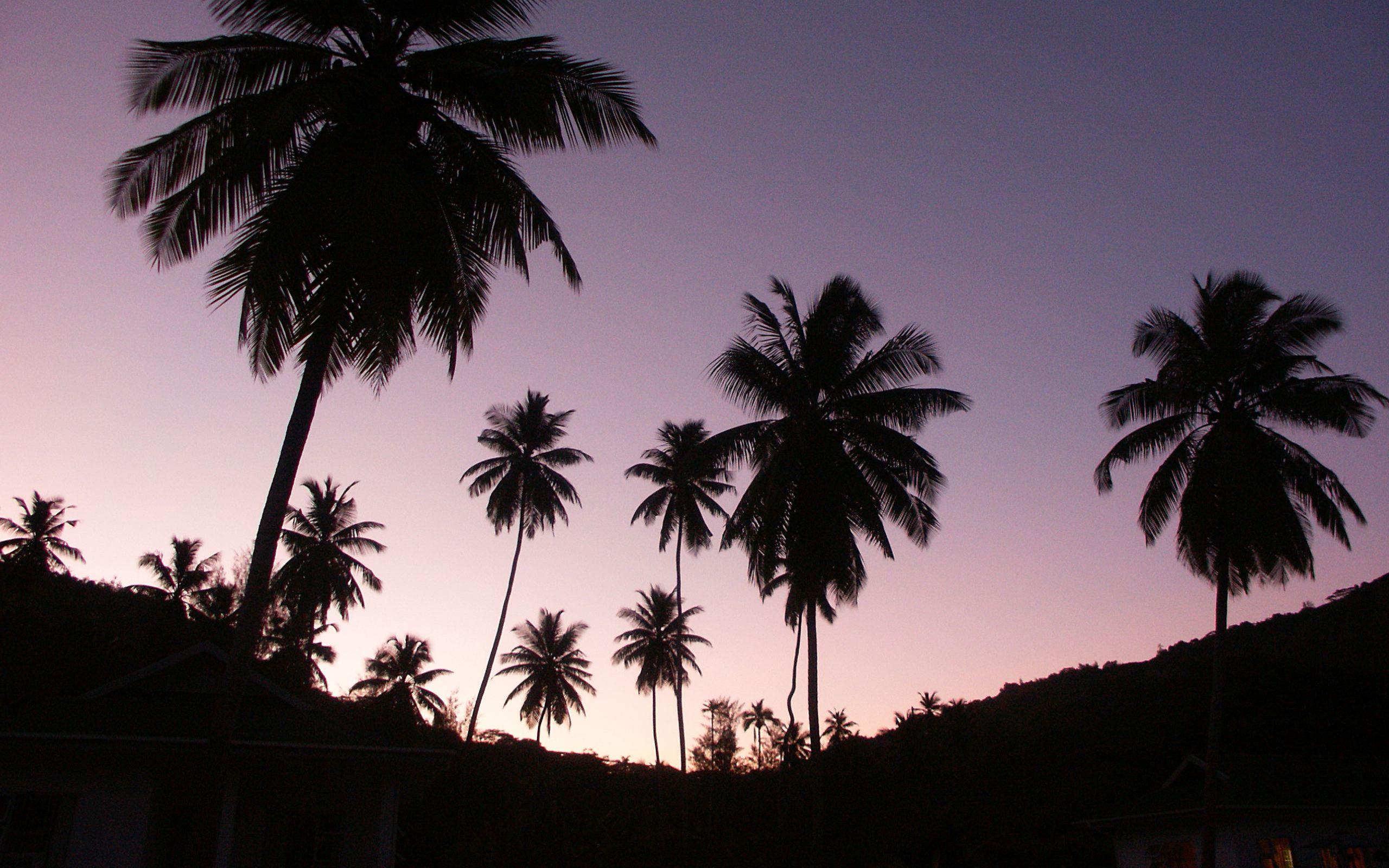 Amazing Wallpaper Macbook Palm Tree - 382831  Photograph_32072.jpg