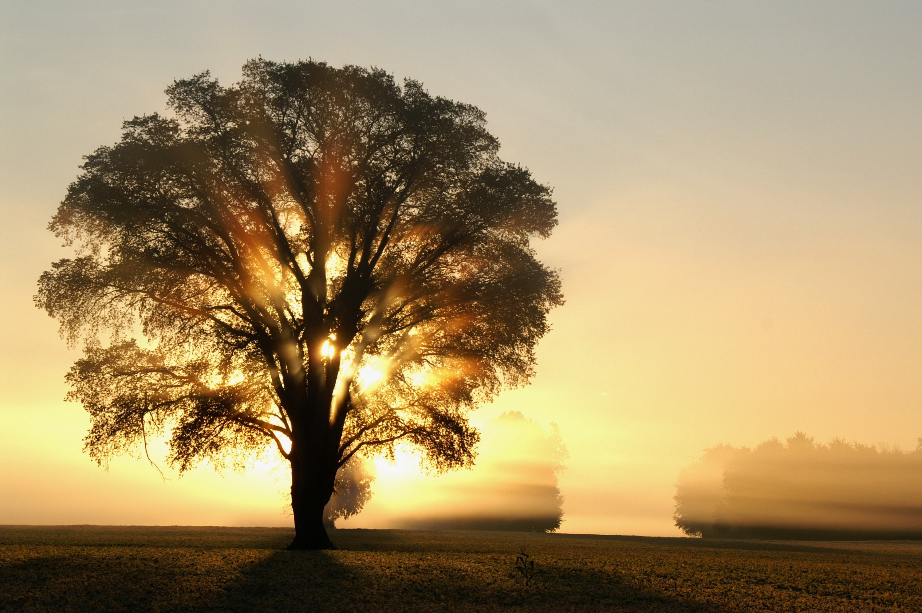 Tree Full HD Wallpaper and Background | 3000x1995 | ID:383022