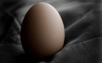 Alimento - Egg Wallpapers and Backgrounds ID : 383887
