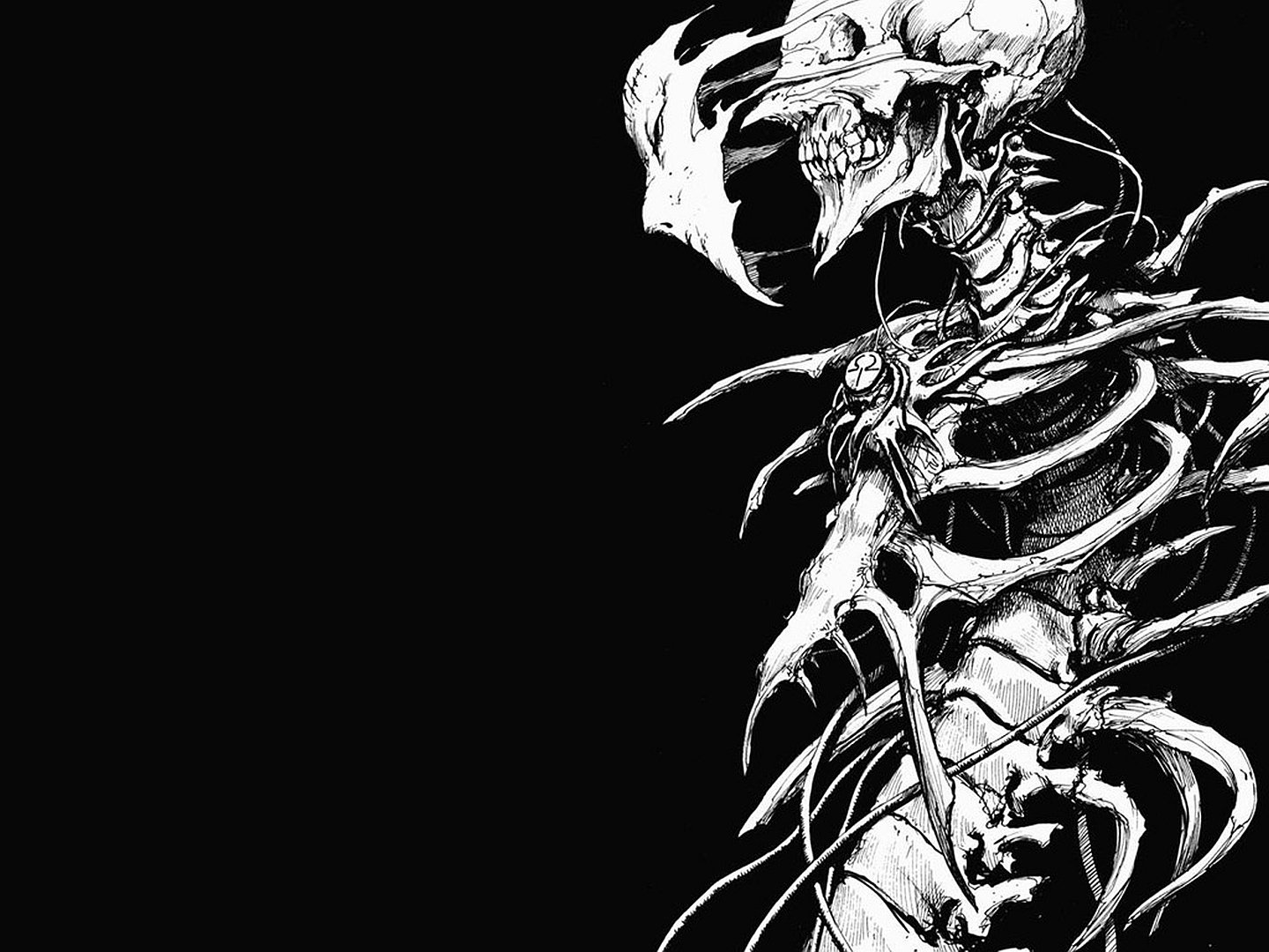 Skeleton Wallpaper And Background Image