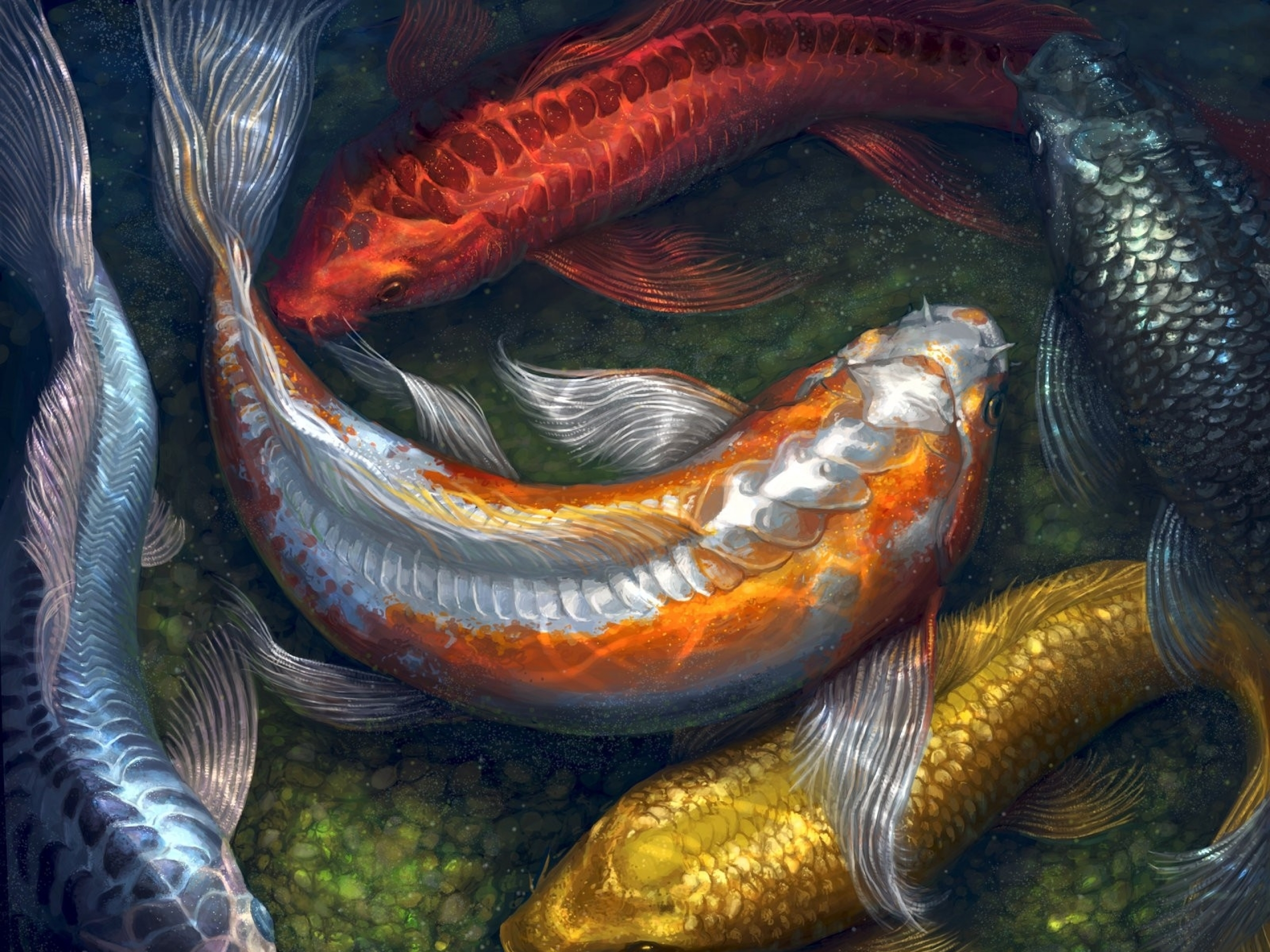 Koi full hd wallpaper and background image 2560x1920 for Koi fish background