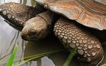 Animal - Turtle Wallpapers and Backgrounds ID : 388986