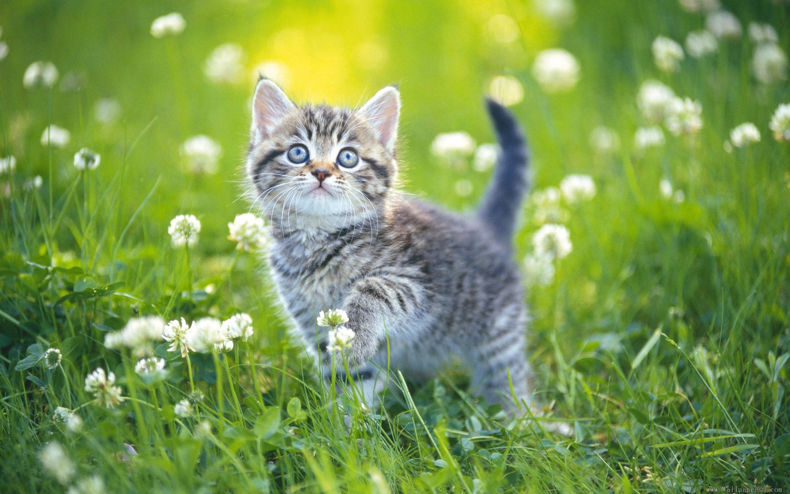 cat full hd wallpaper and background 2560x1600 id 389941
