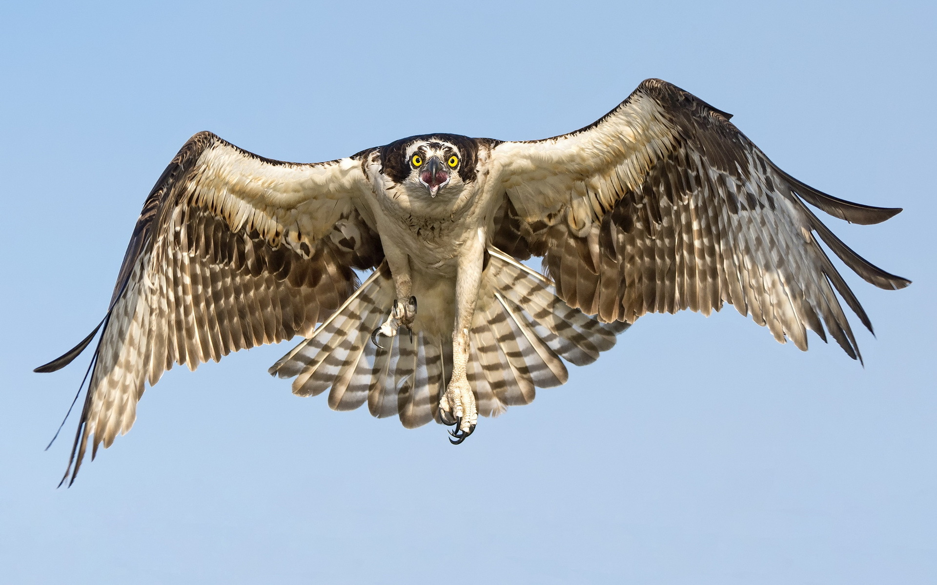 85 hawk hd wallpapers backgrounds wallpaper abyss - Red tailed hawk wallpaper ...