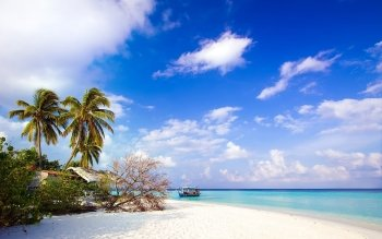 Fotografie - Tropical Wallpapers and Backgrounds ID : 392513