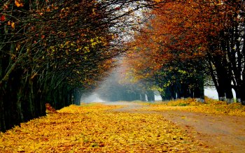 Aarde - Herfst Wallpapers and Backgrounds ID : 394276