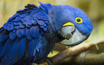 Animalia - Macaw Wallpapers and Backgrounds ID : 394327