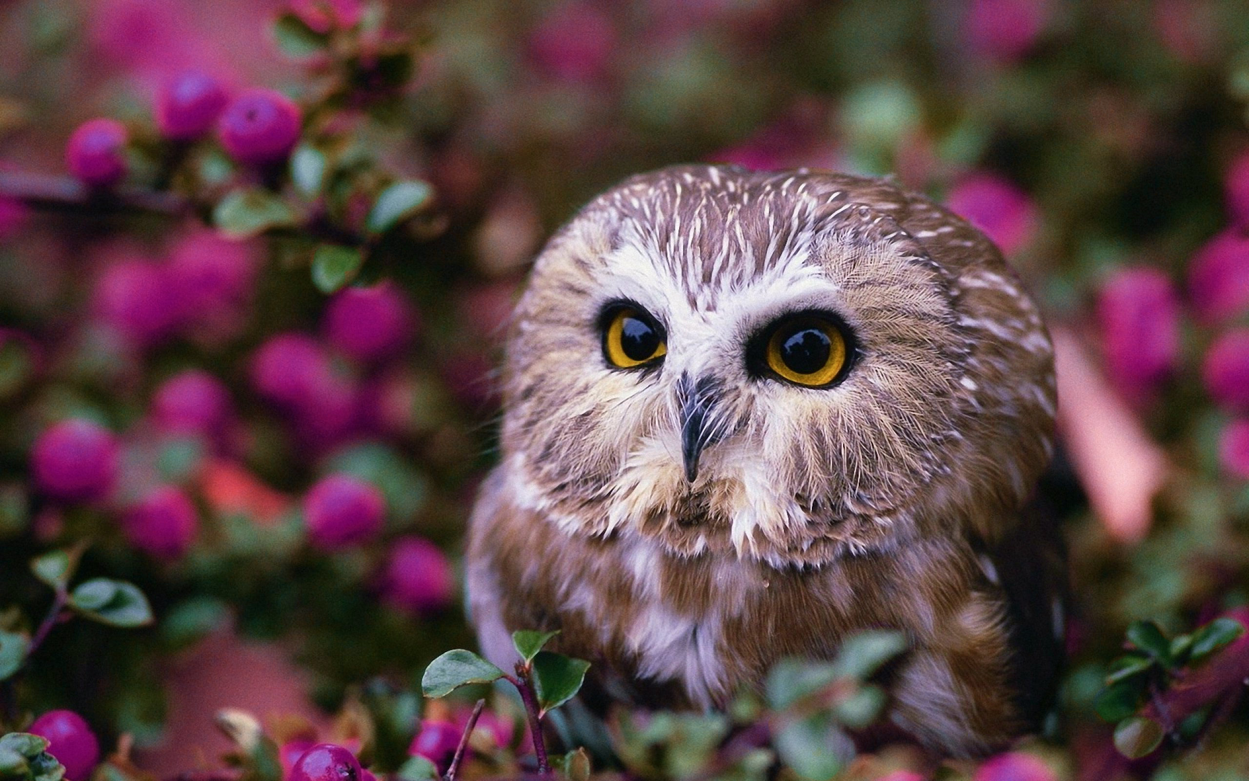 owl wallpaper desktop 7 - photo #26