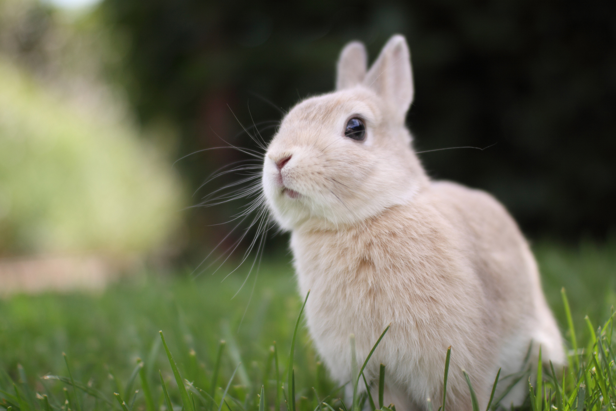 Cute White Rabbit Wallpapers For Desktop: Rabbit Full HD Wallpaper And Background Image