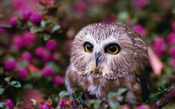 Animal - Owl Wallpapers and Backgrounds ID : 396131