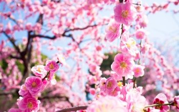 Earth - Blossom Wallpapers and Backgrounds ID : 396499