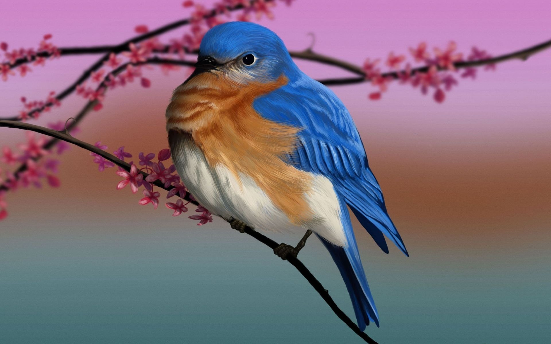 Bird hd wallpaper background image 1920x1200 id 397641 wallpaper abyss - Pheasant wallpaper for walls ...
