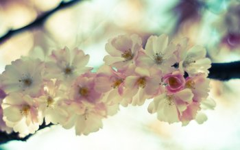 Earth - Blossom Wallpapers and Backgrounds ID : 397871