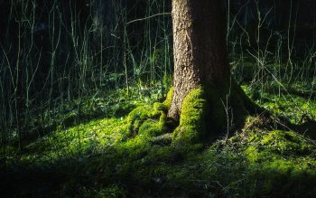 Earth - Moss Wallpapers and Backgrounds ID : 397892
