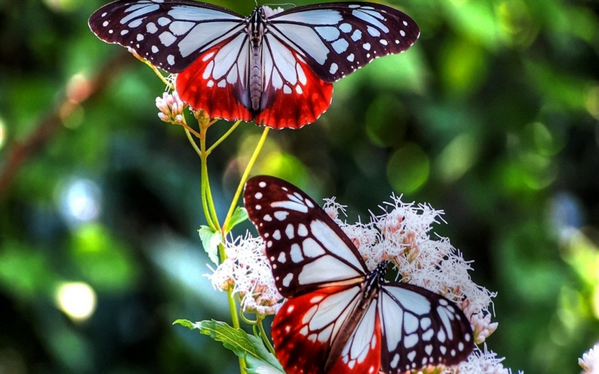 Butterfly HD Wallpaper | Background Image | 1920x1200 ...